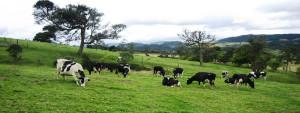 Nuevos Retos para Invertir en San Carlos Costa Rica